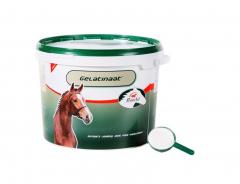 Gelatinaat 2 kg Paard