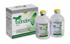 Wondercef Equidi 4g + 80ml solution